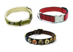 3 Unique Dog Collars that will make your Pooch a Standout