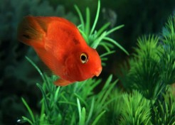 Pet Care Guide: Tropical Fish