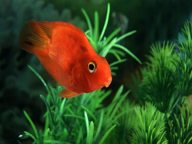 Pet care guide tropical fish for Where to buy pet fish
