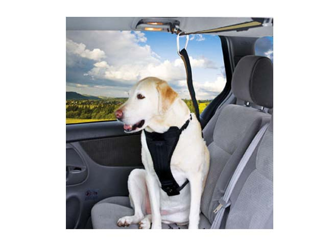 Buckle Up That Pooch