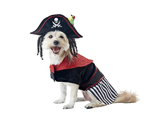 Pirate costumes are always a Halloween favorite and this pet pirate costume rivals Johnny Deppu0027s Pirateu0027s of the Caribbean rendition.  sc 1 st  Momtastic & Halloween Pet Costumes