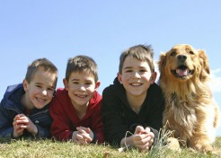 What to Consider When Choosing a Dog for Your Family