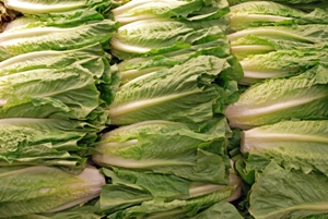 Romaine Lettuce for Skin Health