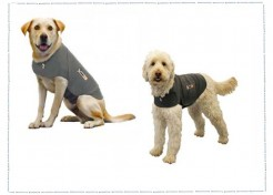 The Calming Effects of a Thundershirt