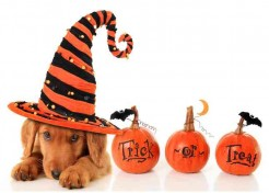 Top Tips on Keeping Your Pets Safe this Halloween