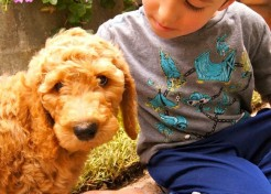 What Can Your Puppy Teach Your Kids?