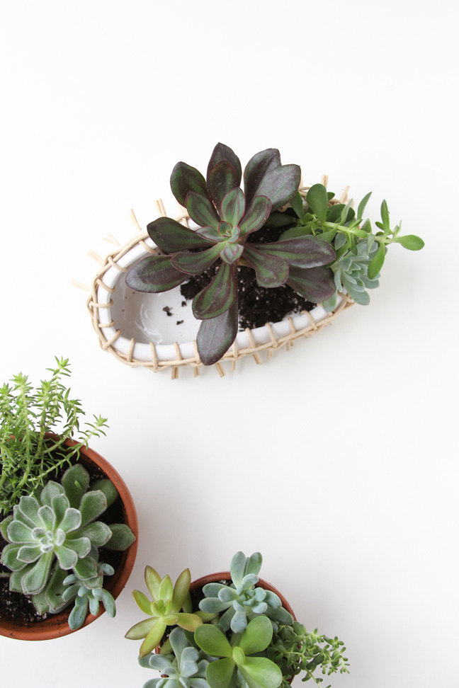 gift-idea-for-someone-with-a-green-thumb