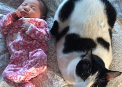 5 Tricks for Getting Your Animals & New Baby Acquainted
