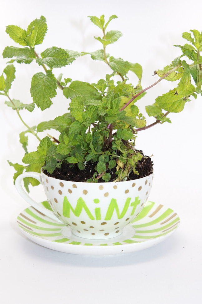 Design Your Own DIY Mother's Day Teacup Garden