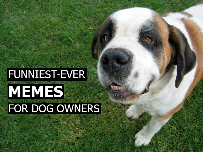 Funniest Ever Memes For Dog Owners