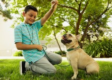 4 Commands Every Dog Should Know No Matter What