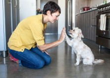 How to Choose a Dog Sitter: A Checklist