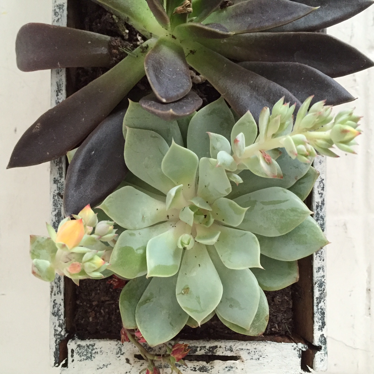 window box succulent garden