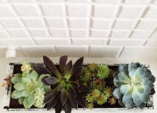 DIY Window Box Garden for Succulents