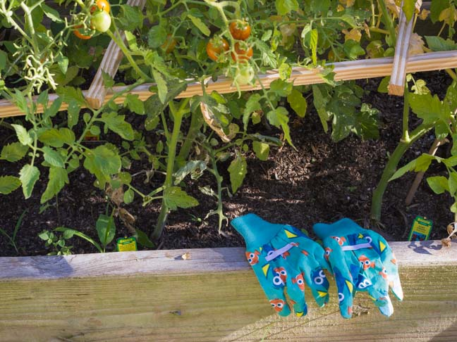 container garden blue gardening gloves