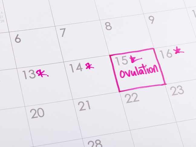 When Do You Ovulate?