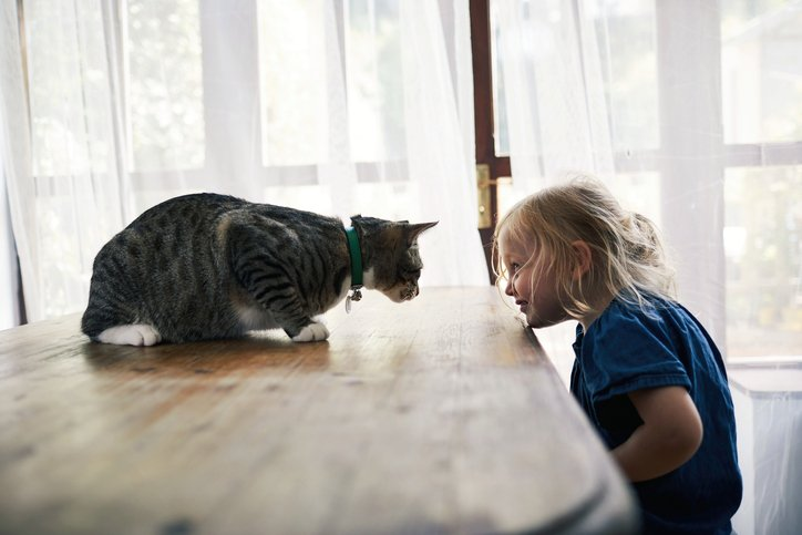 What Fostering Animals Taught Our Family