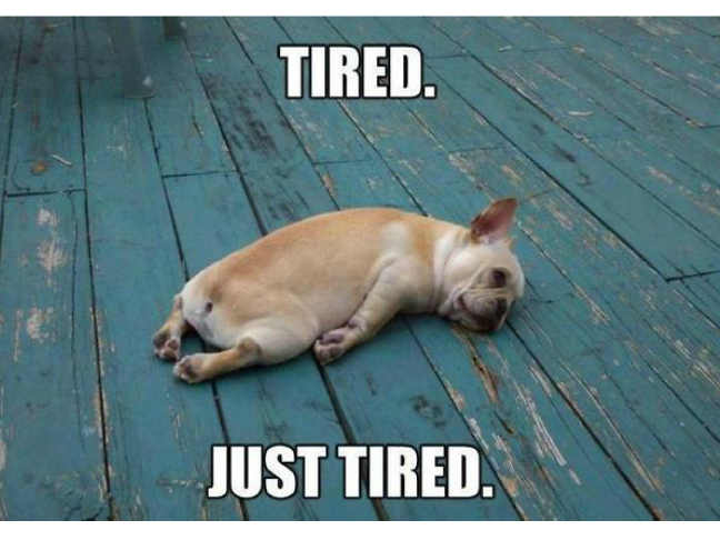 Funny Tired Mom Meme : Funniest ever memes for dog owners