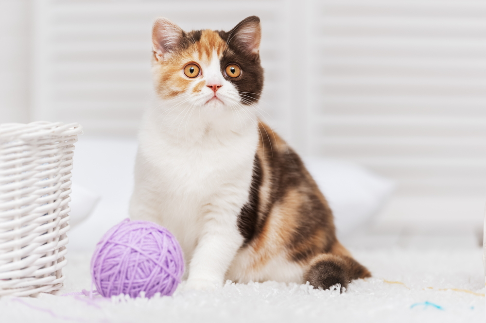 Games and Treats to Keep Cats Engaged When Alone
