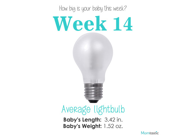 How Big Is Your Baby: Week by Week Pregnancy Guide